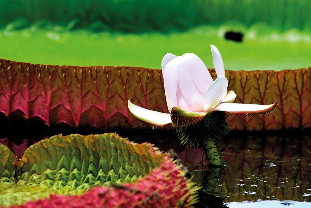 Golf-Gurppenreisen-Mauritius-PortLouis