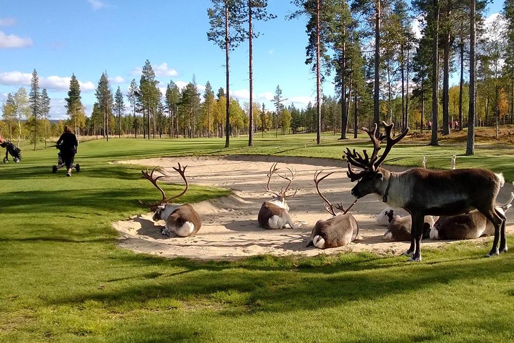 Golf-Gruppenreisen-Finnland-Helsinki-Lappland-Levi-Golf