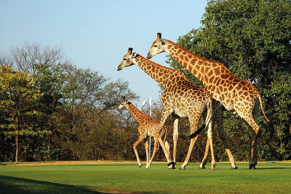 Silvester-Golfreise-Südafrika-Garden-Route-Hans-Merensky